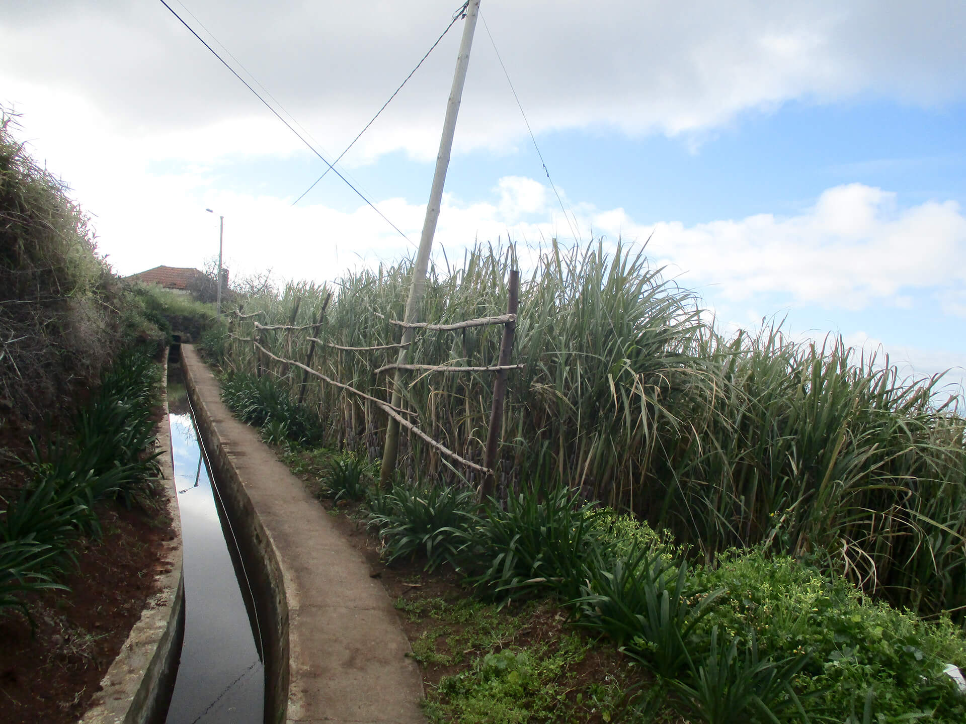 Levada Nova - Sugar Cane